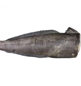 南极犬牙鱼