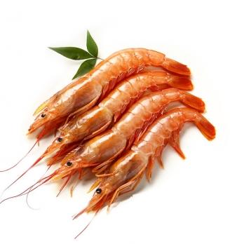 阿根廷红虾