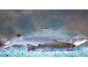 FDA de-activates 2016 import alert, removes barrier to GE salmon