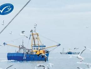 全球MSC认证海产品销量超千万吨